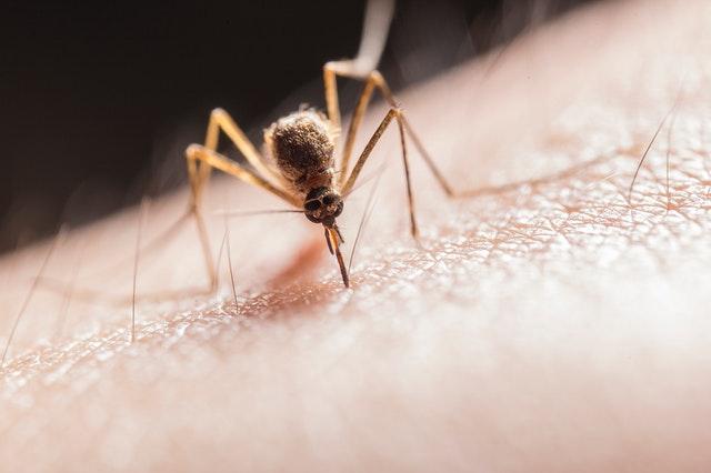 środki owadobójcze